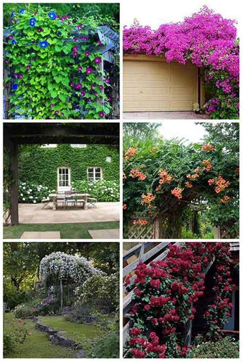 pergolas with climbing plants pictures pixelmari com