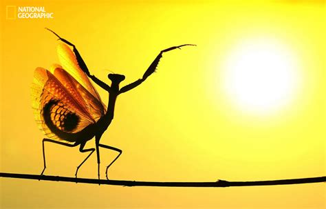 best photo of 2014 best of national geographic photo contest 2014 xcitefun net