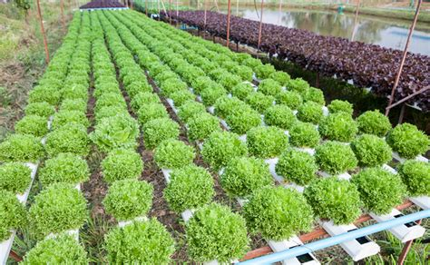 Ihidrousa Com Blog News Are Organic And Hydroponic Hydroponic Vegetable Gardening