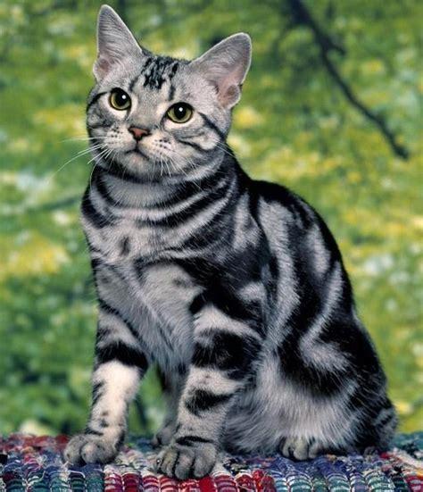 Salman's Pets   My blog to share tips regarding pet care