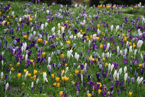 first signs of spring at rhs garden wisley part two