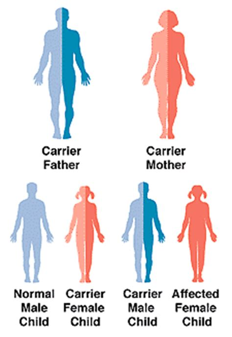 Color Blind Blue Green Your Genes Your Choices Recessive Genetic Disorder