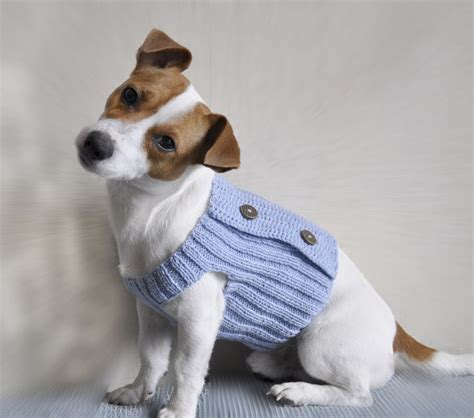 patterns for knitted dog sweaters small knitted sweaters for small dogs free patterns
