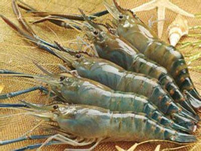 Udang Windu By Fr3sh Fish t 244 m c 224 ng m 243 n ä n ngon vá thuá c qu 253 b 225 o quẠng ng 227 i ä iá n tá