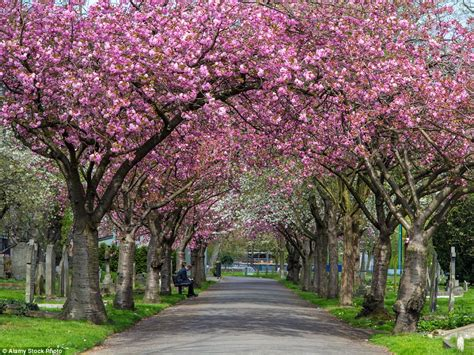 blossom trees from northern ireland to japan the world s most beautiful