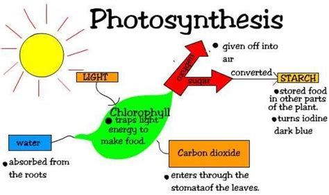 historical geography of crop plants a select roster books 1000 images about 3rd grade on photosynthesis