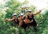 minjin jungle swing activities in australia activities from sydney to the