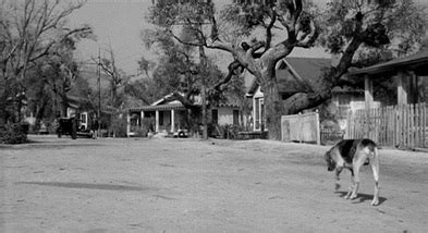 to kill a mockingbird mad atticus finch shooting www pixshark images galleries with a bite