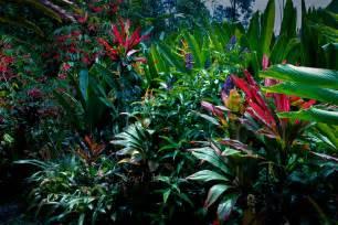 Hawaiian Tropical Plant Nursery - hawaiian tropical gardens containing exotic plants amazing tropical scenery garden vignettes