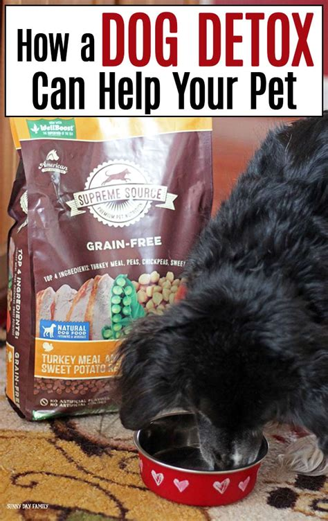 Dogs Detox Diet by How A Detox Can Help Your Pet Day Family
