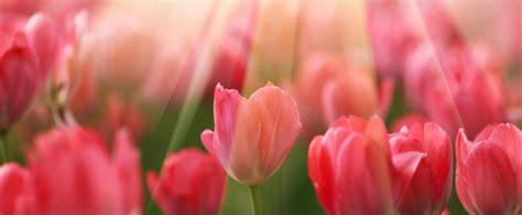 imagenes en ingles de flores los 7 grupos de flores de bach