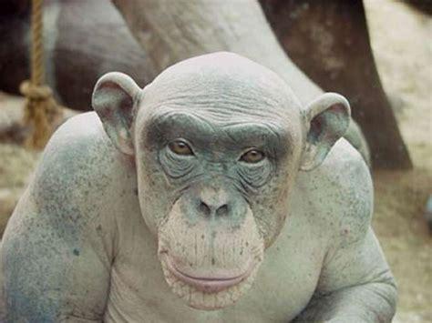ugliest animals bald lvldoom lyrics
