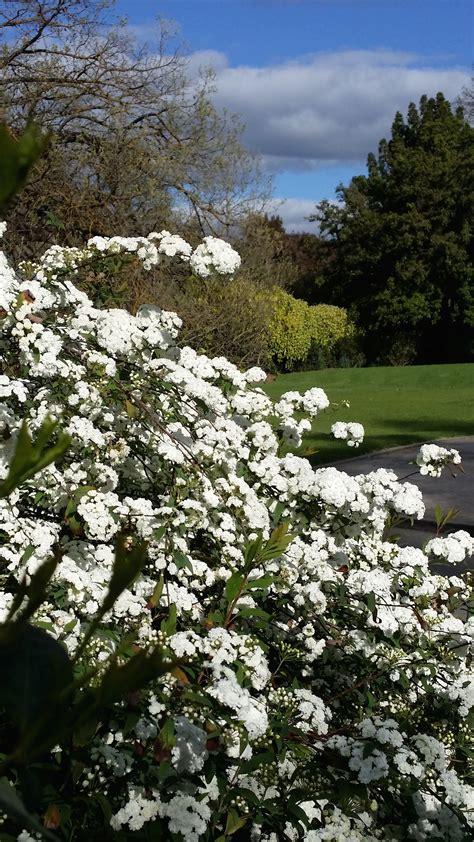 botanic gardens of adelaide adelaide botanic gardens adelaide