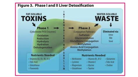 Phase 1 Vs Phase 2 Detox by Detoxification