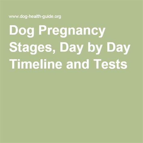 pregnancy stages day by day 31 besten whelping bilder auf haustiere hunde und hundezwinger