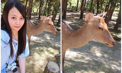 fed  deer  tourist  despising