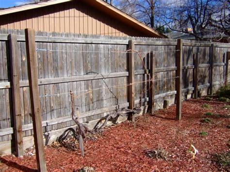 Grape Vine Trellis Supplies grapevine trellis installation by a better garden maintenance we can provide both trellising