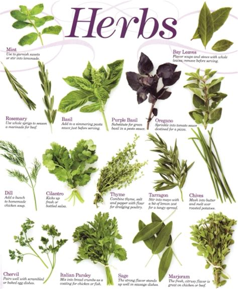 herb growing chart southern california garden guide basic gardening herbs
