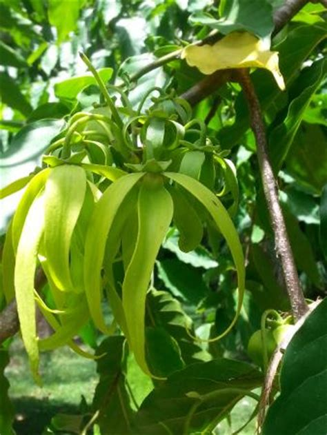 rockhton botanic gardens belize botanic gardens san ignacio top tips before you