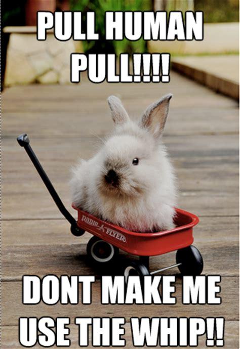 Rabbit Meme - rabbit ramblings july 2013