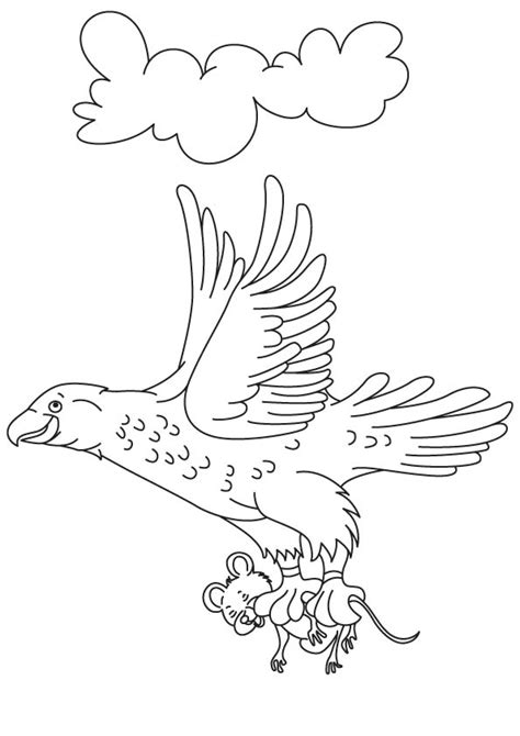 birds of prey coloring pages