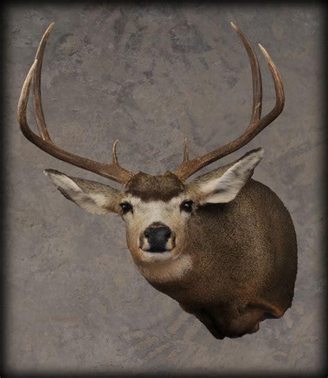 Deer Pedestal Tietz Taxidermy And Wildlife Art Lebanon Wi