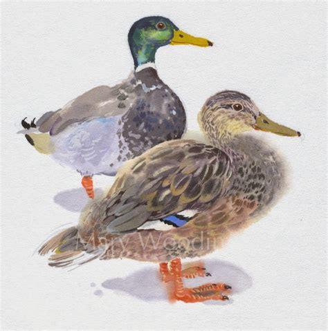 Mary Woodin England Illustrator Mallard Ducks | mary woodin england illustrator mallard ducks