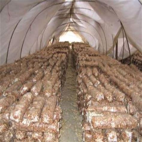 coltivare tartufi in casa come coltivare i funghi coltivazione ortaggi