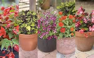 Best Patio Plants In Pots by Patio Plants Trial By Which Gardening Telegraph