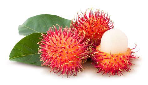 Bibit Rambutan Antalagi tanaman buah rambutan dalam pot kebun bibit buah