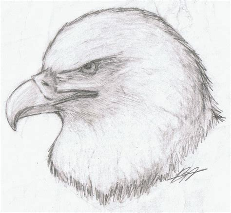 realistic eagle coloring pages realistic eagle by kyuubi0017 on deviantart