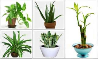 easiest indoor plants the best indoor plants that reduce stress purify the air