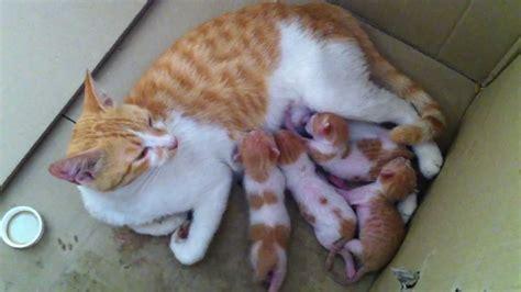 Kucing Max Kitt Milk the gallery for gt cat