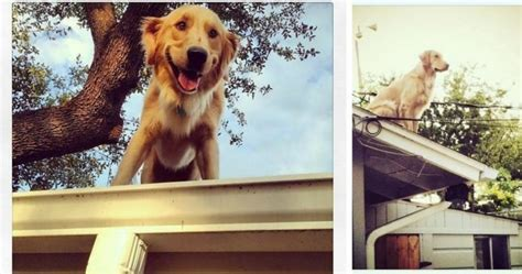roof jumping dog huckleberry startles passersby texas dog hangs out on the roof but don t worry he s not