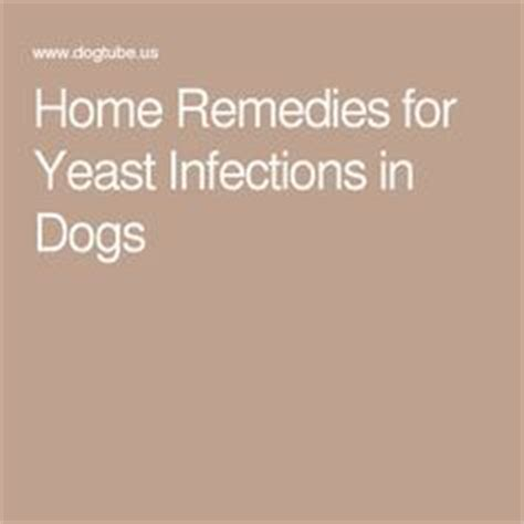 skin yeast infection home remedy for yeast infection in ears fur babies dogs and ears