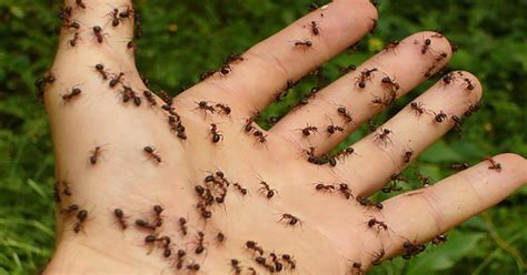 get rid of ants fast with these 8 easy and natural solutions