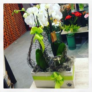 come potare le orchidee in vaso orchidee phalaenopsis in vaso come conservarle
