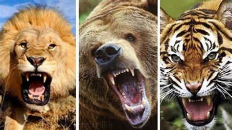 imagenes de animales venenosos image gallery los animales mas peligrosos
