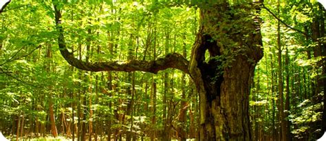 trees symbolism celtic meaning of symbolic trees and ogham meanings