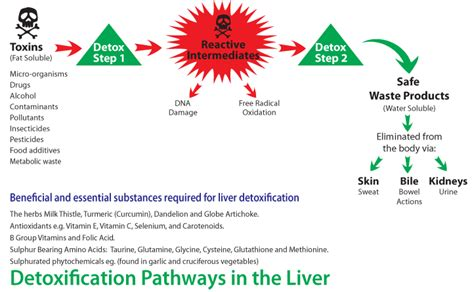 Detox Procedure by Glutathione Our S Most Powerful Weapon