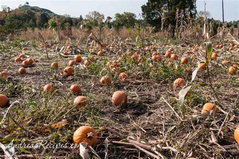 ticonderoga farms ticonderoga farms autumn pumpkins roasted pumpkin butter