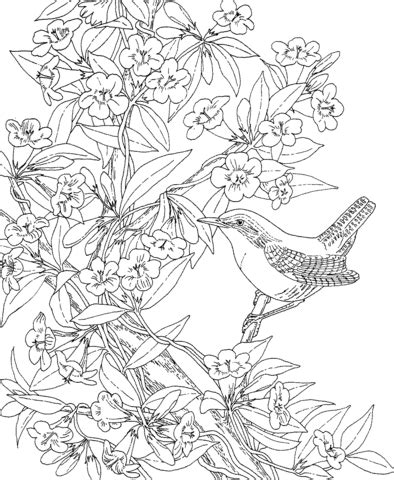 yellow jessamine coloring page yellow jessamine sheet coloring pages