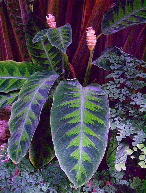 jungle foliage magical jungle foliage flickr photo