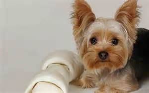 terrier insurance compare plans prices