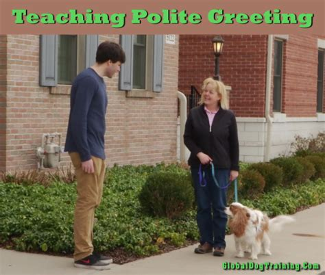 teach puppy not to jump teaching a not to jump polite and person greeting