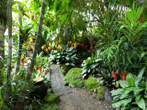 subtropical garden ideas sub tropical garden design ideas search gardening tropical garden