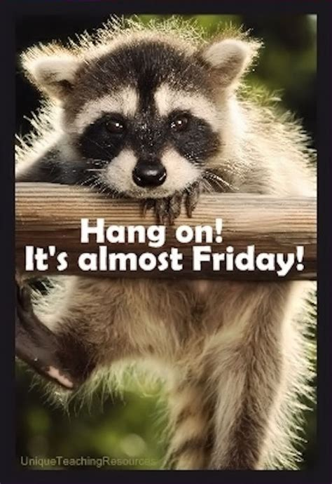 Almost Friday Meme - hang on its almost friday pictures photos and images for