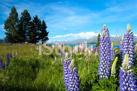New Zealand Post Address Finder File Lake Tekapo 2 New Zealand Travel Guide At Kumpulan Foto Cantik