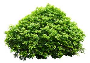this place really needs more shrubs here you go