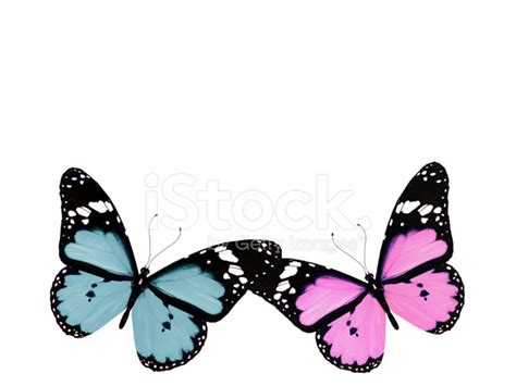 Gamis Buterfly Premium White Pasmina pink and blue butterfly isolated on white stock photos freeimages